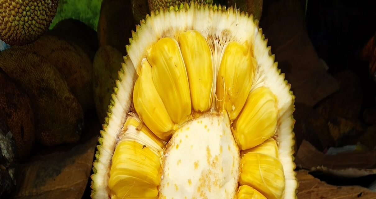 Health News Know benefits of Jack fruit Seeds for the health purpose neer